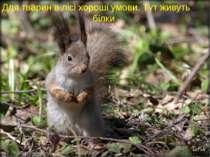 Для тварин в лісі хороші умови. Тут живуть білки