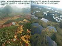 Клімат в тундрі суворий, літо дуже коротке (2-3 місяці) й прохолодне. Темпера...