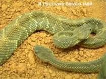В пустелях багато змій.
