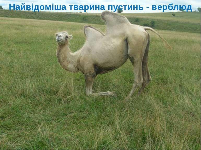 Найвідоміша тварина пустинь - верблюд