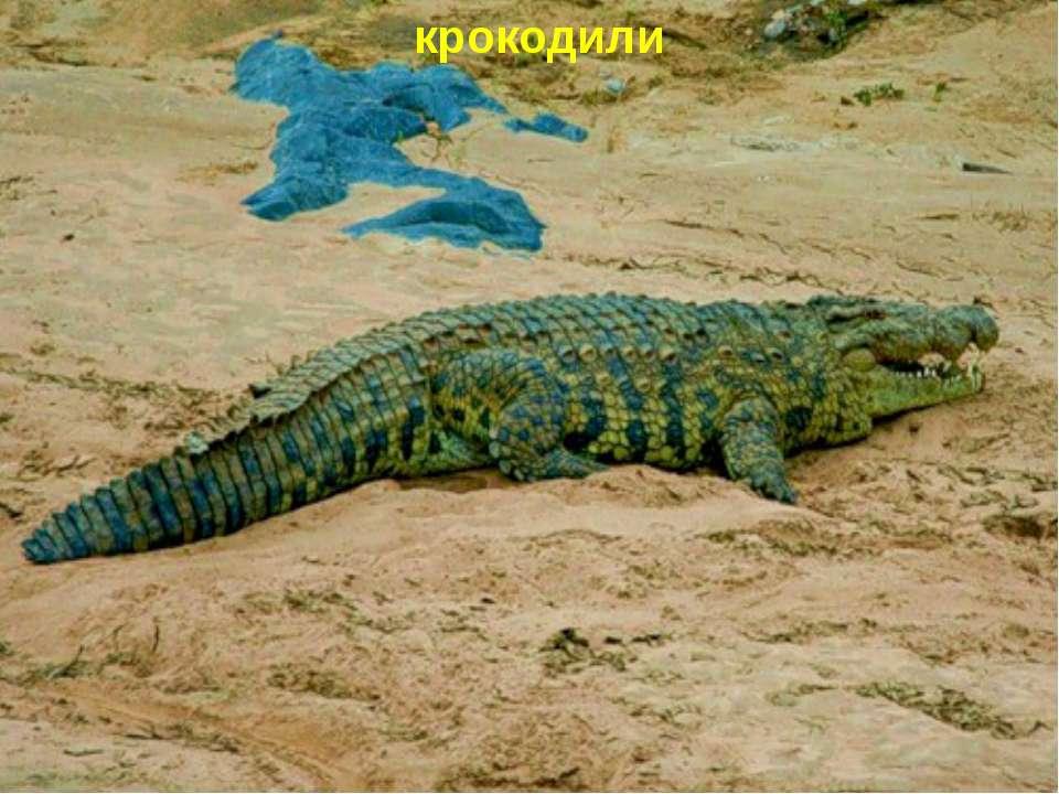 крокодили