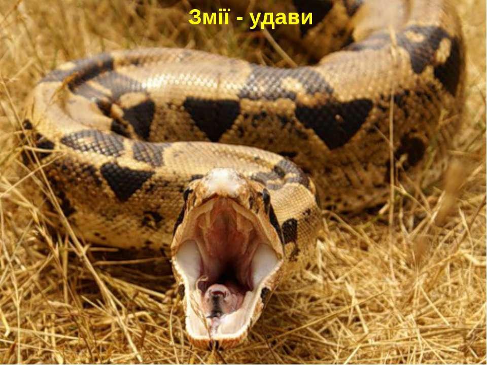 Змії - удави