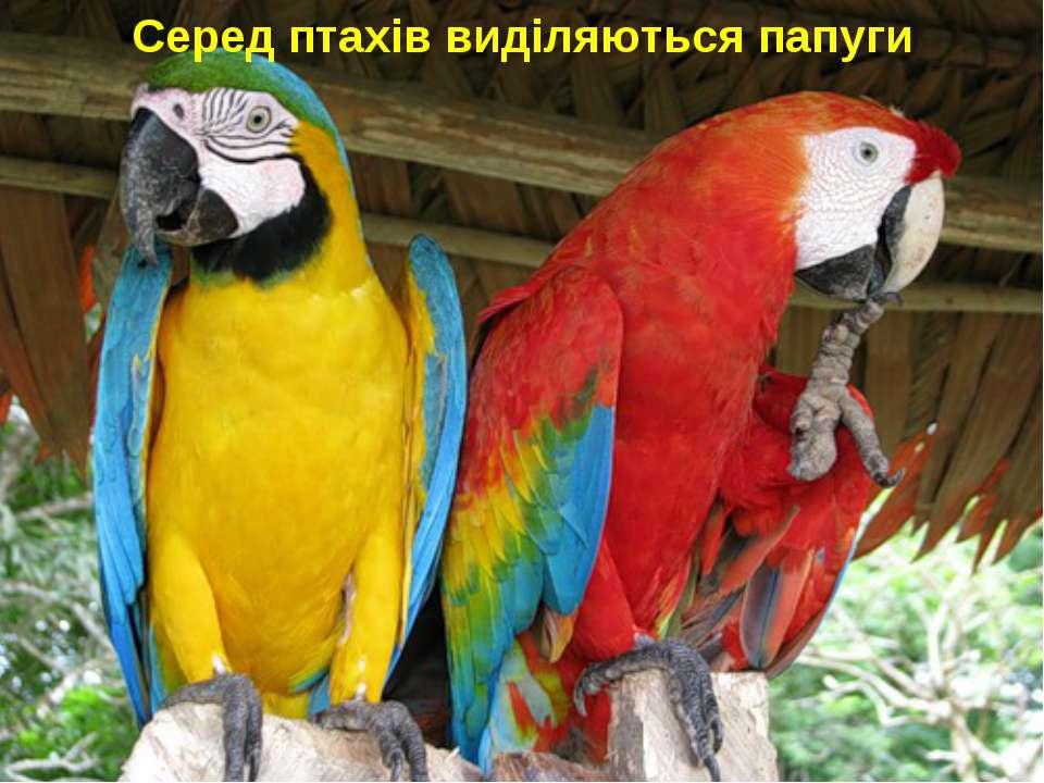 Серед птахів виділяються папуги