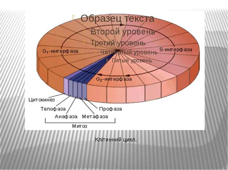 Клітинний цикл.