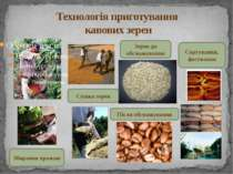 Технологія приготування кавових зерен Збирання врожаю Сушка зерен Зерна до об...