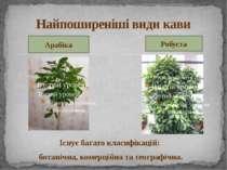 Існує багато класифікацій: ботанічна, комерційна та географічна. Найпоширеніш...