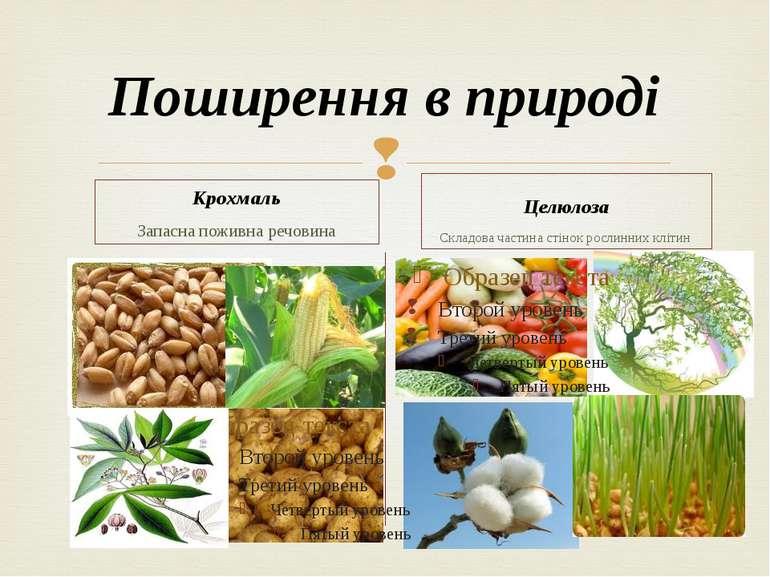 Поширення в природі Крохмаль Запасна поживна речовина Целюлоза Складова части...