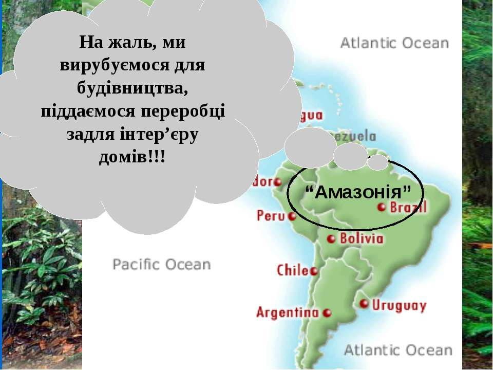http://www.ran.org/info_center/about_rainforests.html Тропічні ліси: Коста-Рі...
