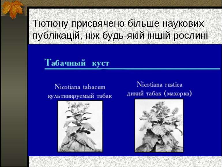 Тютюну присвячено більше наукових публікацій, ніж будь-якій іншій рослині