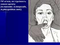 ПІР м'язів, які піднімають нижню щелепу (m.masseter, m.temporalis, m.pterygoi...