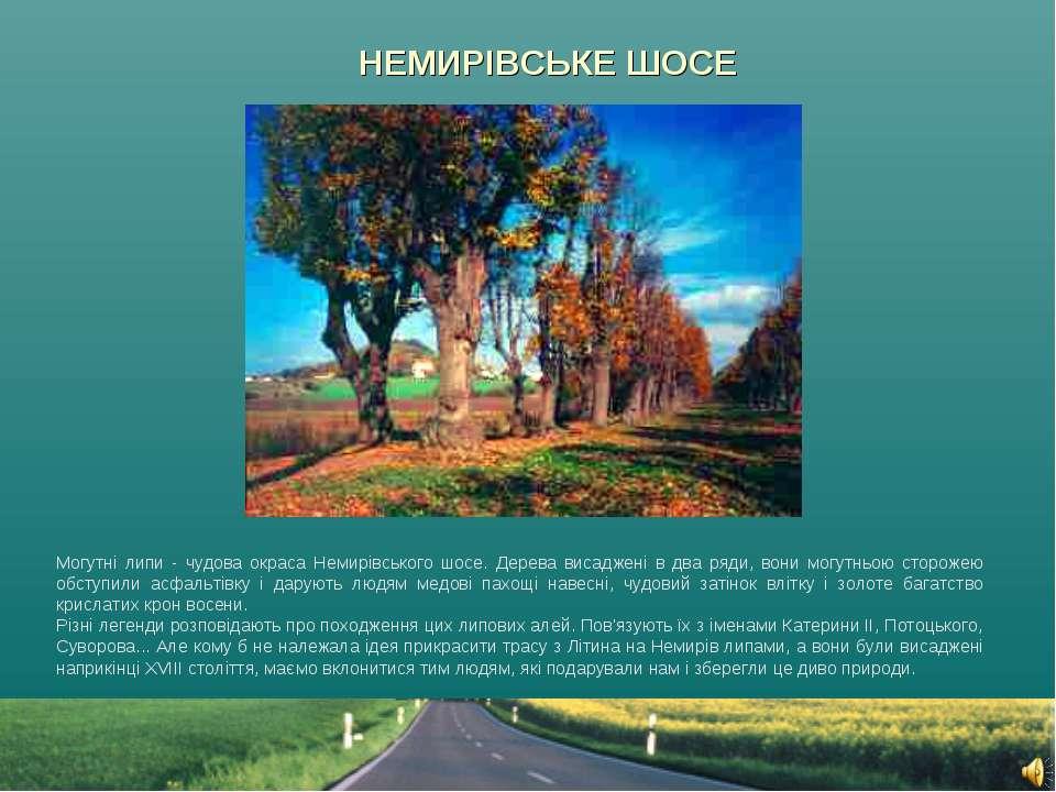 НЕМИРІВСЬКЕ ШОСЕ Могутні липи - чудова окраса Немирівського шосе. Дерева виса...
