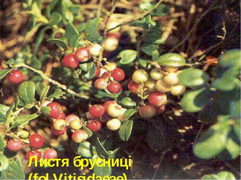 Листя брусниці (fol.Vitisidaeae)