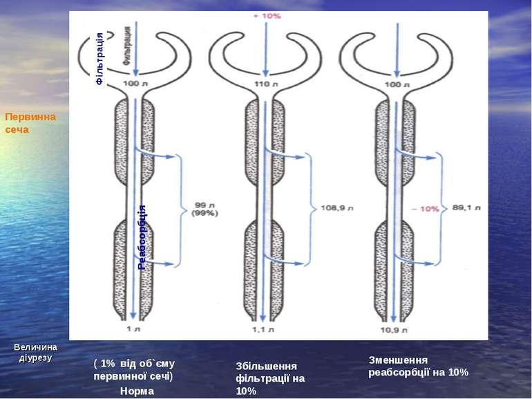 Величина діурезу Збільшення фільтрації на 10% ( 1% від об`єму первинної сечі)...