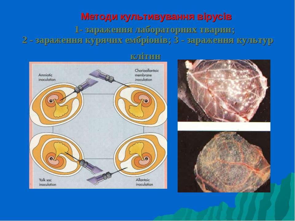 1- зараження лабораторних тварин; 2 - зараження курячих ембрiонiв; 3 - зараже...