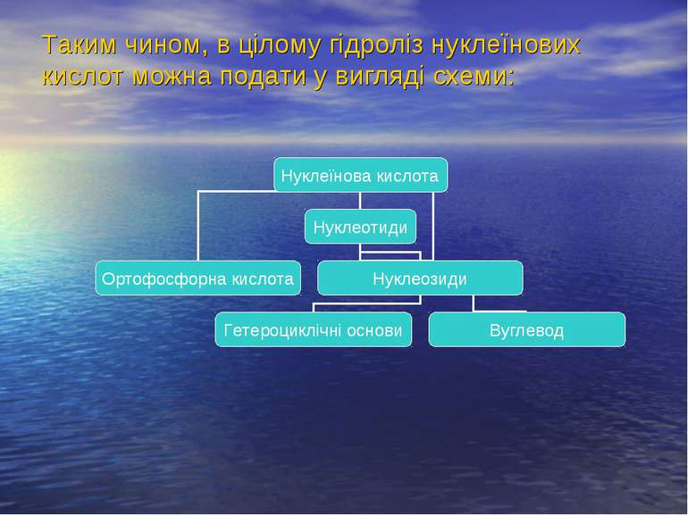 Таким чином, в цілому гідроліз нуклеїнових кислот можна подати у вигляді схеми: