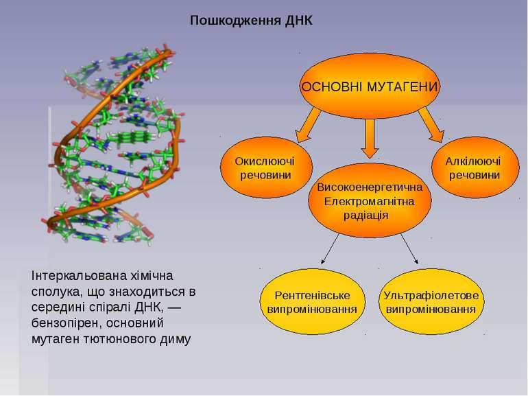 Пошкодження ДНК
