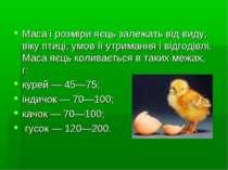 Маса і розміри яєць залежать від виду, віку птиці, умов її утримання і відгод...