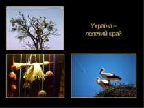 Україна – лелечий край