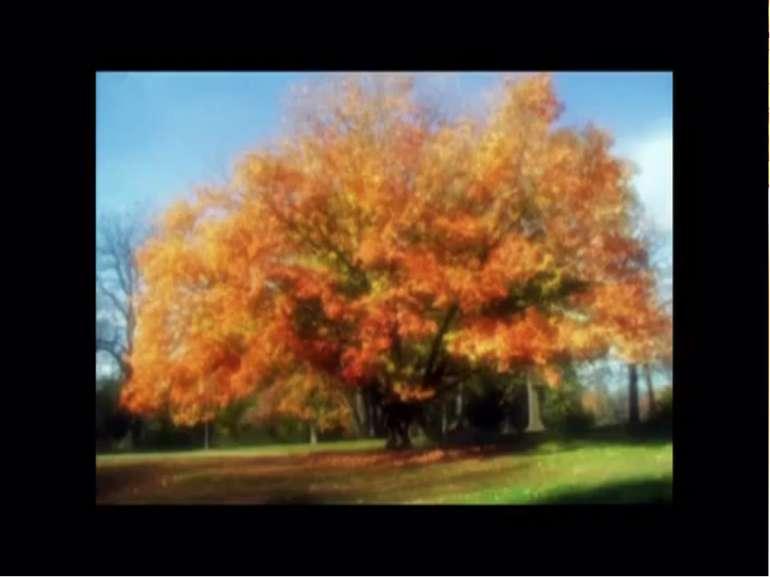 ЛІНА КОСТЕНКО « Осінній день» Які осінні квіти Можна побачити В цю пору року?...