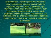Ціанобактерії – головні учасники «цвітіння» води, спричиняють масові замори р...