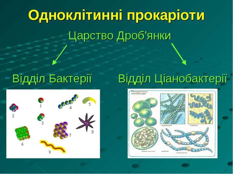 Одноклітинні прокаріоти Царство Дроб'янки Відділ Бактерії Відділ Ціанобактерії