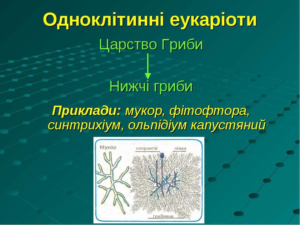 Одноклітинні еукаріоти Царство Гриби Нижчі гриби Приклади: мукор, фітофтора, ...
