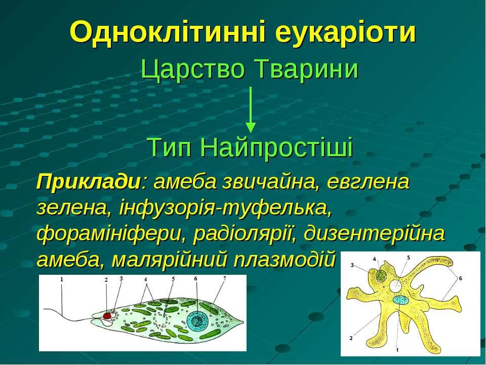 Одноклітинні еукаріоти Царство Тварини Тип Найпростіші Приклади: амеба звичай...