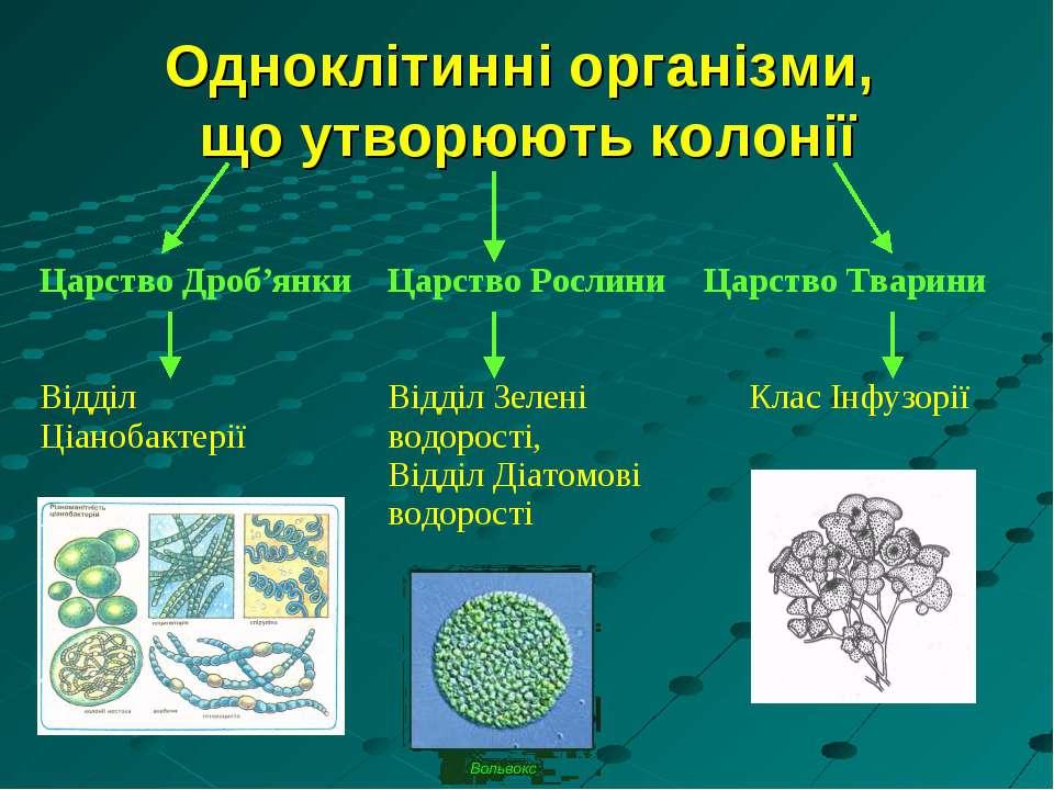 Одноклітинні організми, що утворюють колонії Царство Дроб'янки Відділ Ціаноба...