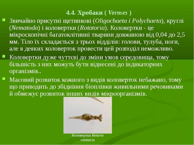 4.4. Хробаки ( Vermes ) Звичайно присутні щетинкові (Olіgochaeta і Polychaeta...