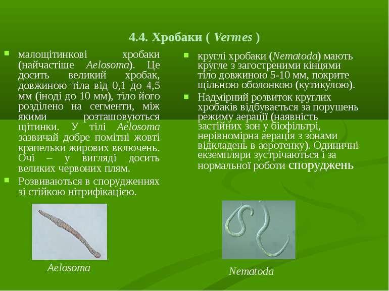 4.4. Хробаки ( Vermes ) круглі хробаки (Nematoda) мають кругле з загостреними...
