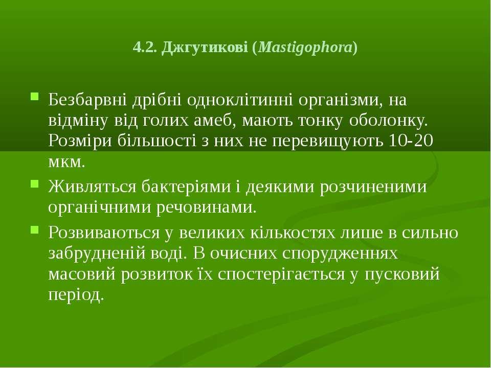 4.2. Джгутикові (Mastіgophora) Безбарвні дрібні одноклітинні організми, на ві...