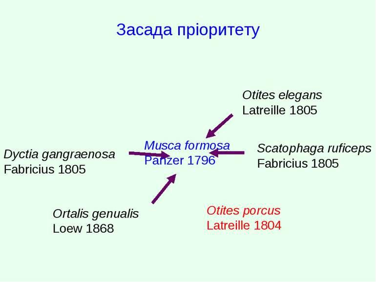 Засада пріоритету Dyctia gangraenosa Fabricius 1805 Ortalis genualis Loew 186...