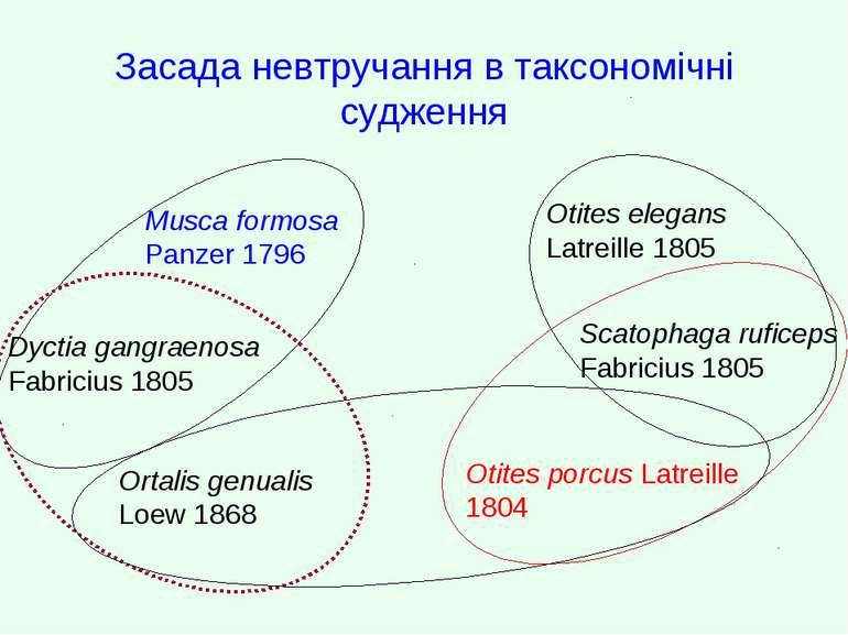 Засада невтручання в таксономічні судження Musca formosa Panzer 1796 Dyctia g...