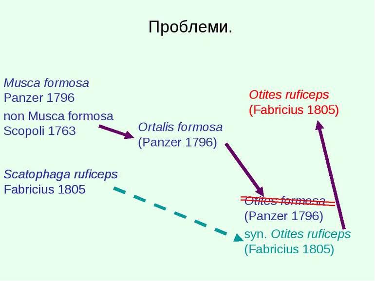 Проблеми. Musca formosa Panzer 1796 non Musca formosa Scopoli 1763 Ortalis fo...