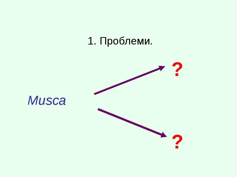 1. Проблеми. Musca ? ?