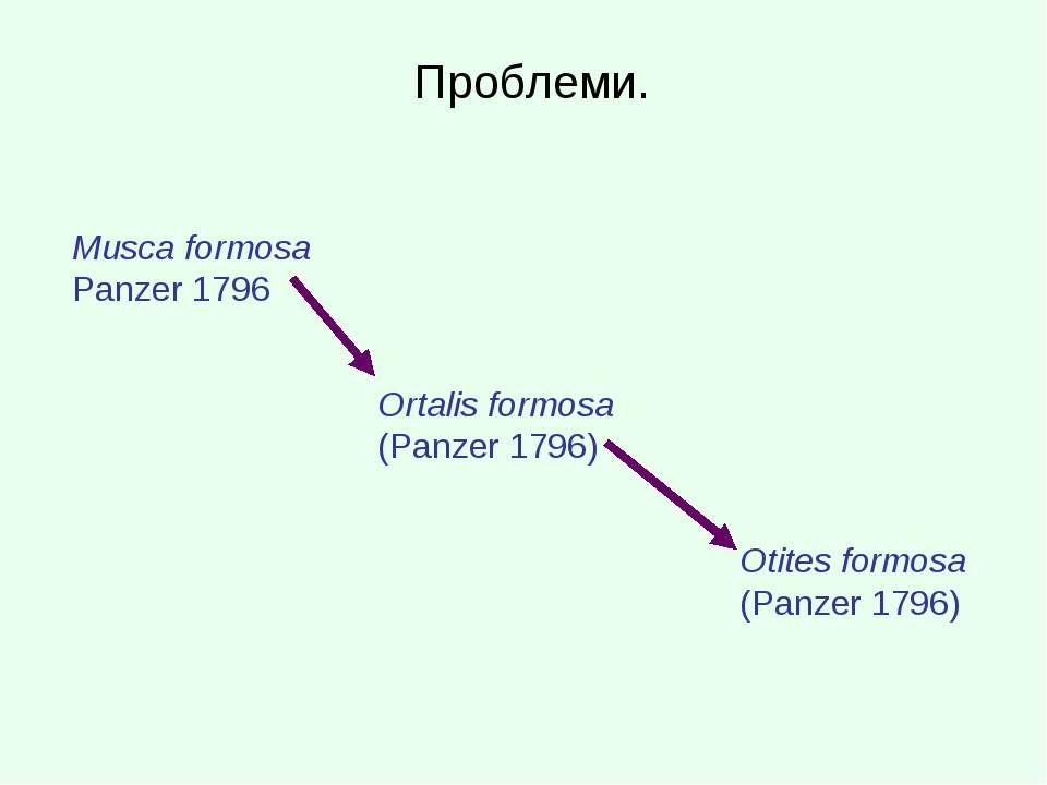 Проблеми. Musca formosa Panzer 1796 Ortalis formosa (Panzer 1796) Otites form...