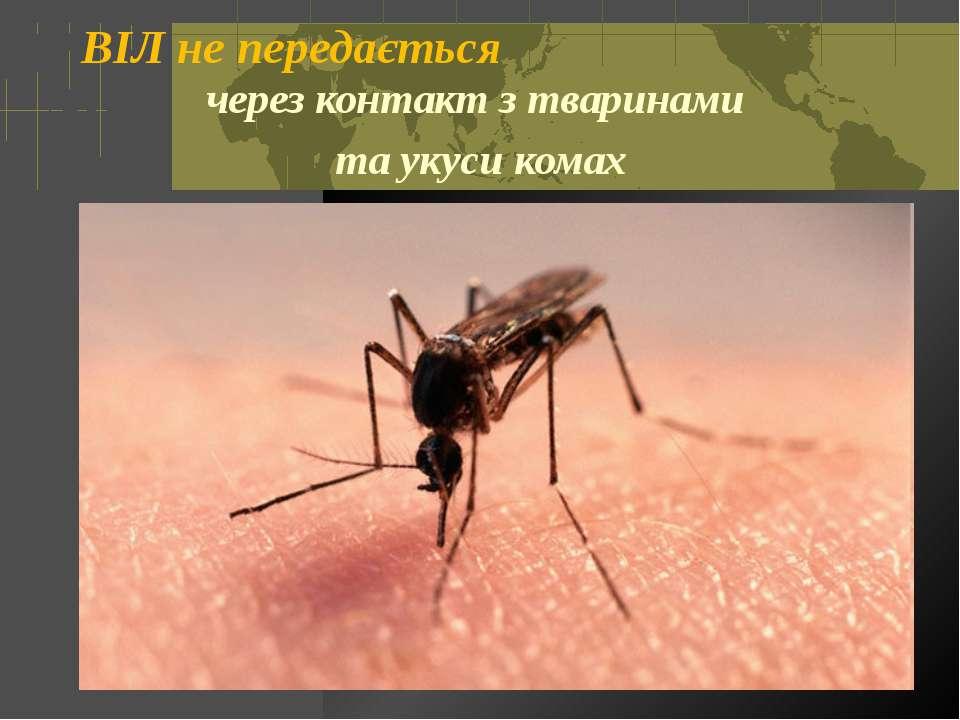 ВІЛ не передається через контакт з тваринами та укуси комах Откидач Вікторія ...