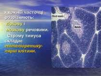 У кожній часточці розрізняють: кіркову і мозкову речовини. Строму тимуса скла...