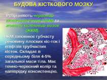 БУДОВА КІСТКОВОГО МОЗКУ Розрізняють червоний кістковий мозок (ЧКМ) та жовтий ...