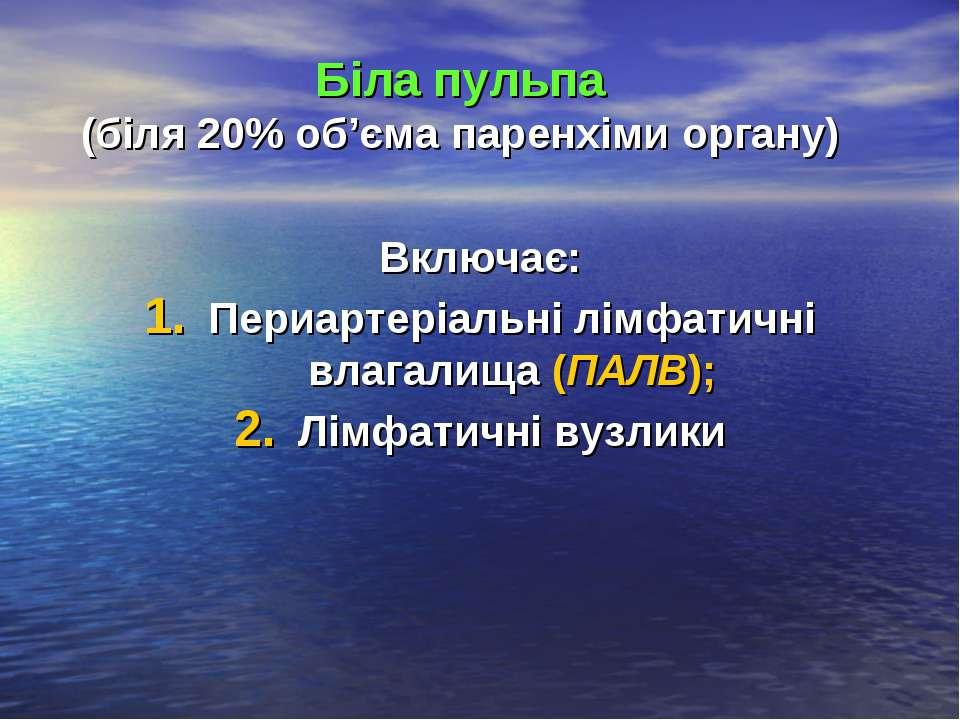 Біла пульпа (біля 20% об'єма паренхіми органу) Включає: Периартеріальні лімфа...