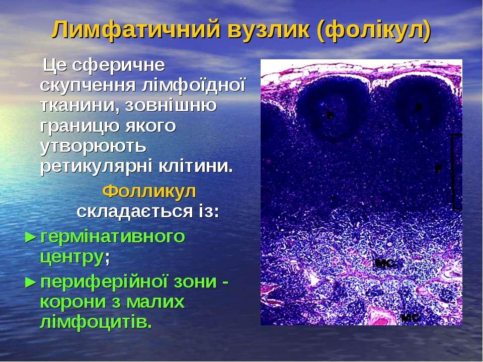 Лимфатичний вузлик (фолікул) Це сферичне скупчення лімфоїдної тканини, зовніш...