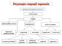 Регуляція секреції гормонів центральна нервова система гіпоталамус гіпофіз щи...