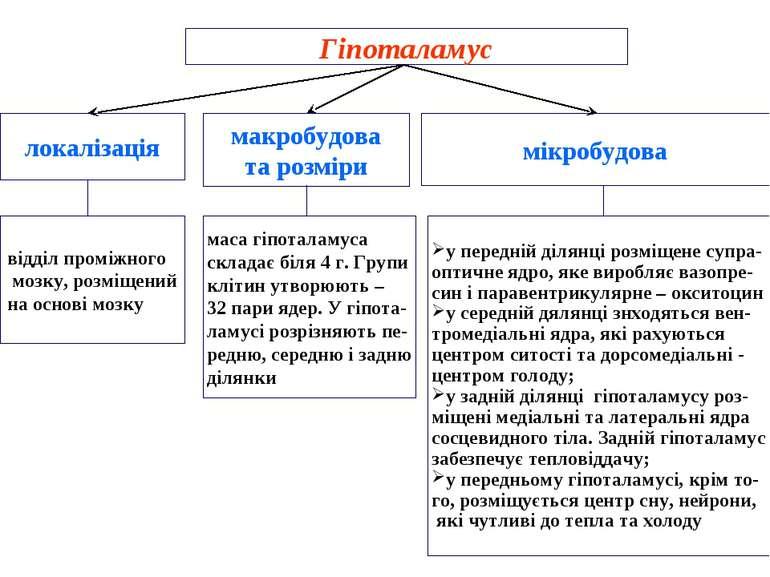 Гіпоталамус локалізація макробудова та розміри мікробудова відділ проміжного ...