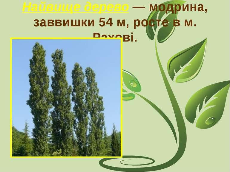 Найвище дерево — модрина, заввишки 54 м, росте в м. Рахові.