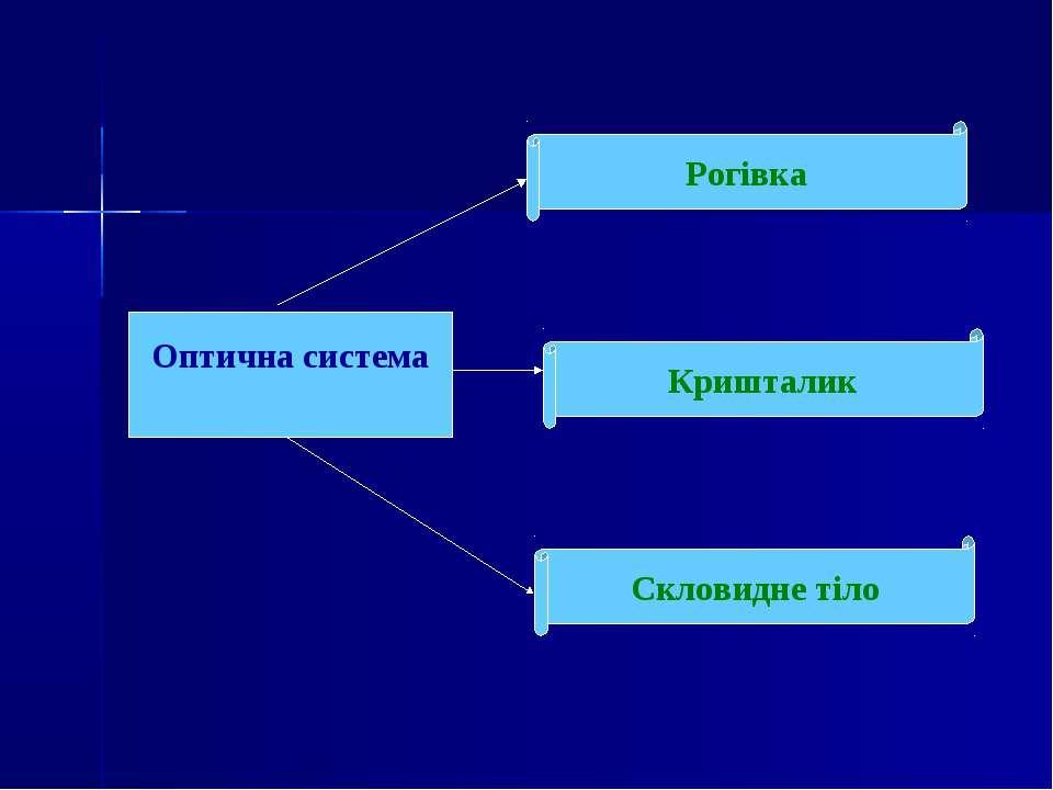 Оптична система Кришталик Скловидне тіло Рогівка