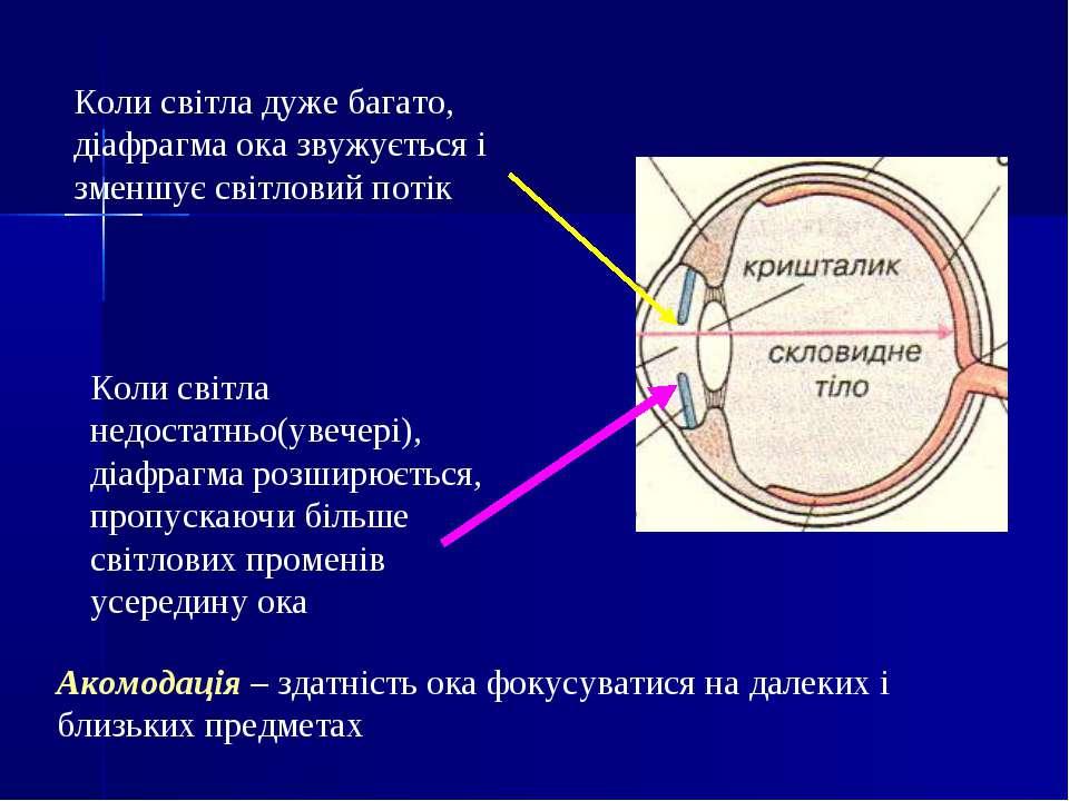 Коли світла дуже багато, діафрагма ока звужується і зменшує світловий потік К...