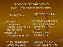 ІМУНОЛОГІЧНИЙ ВПЛИВ КОМПОНЕНТІВ РИБОМУНІЛУ РИБОСОМИ Активація специфічного за...