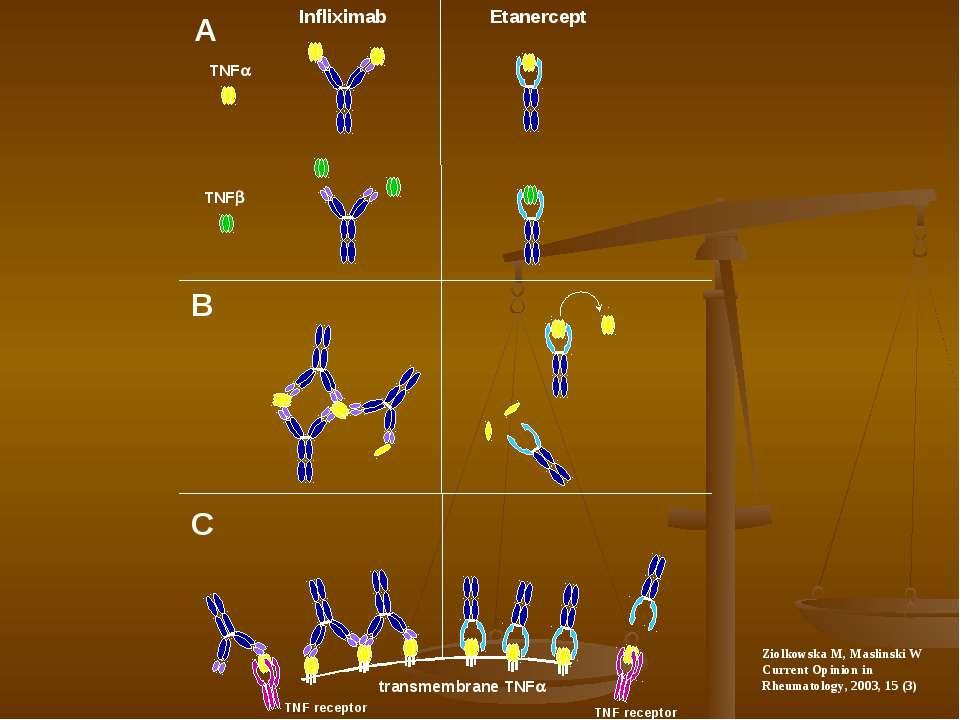 Infliximab Etanercept TNFa TNFb transmembrane TNFa TNF receptor TNF receptor ...