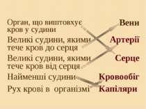 Орган, що виштовхує кров у судини Вени Великі судини, якими тече кров до серц...