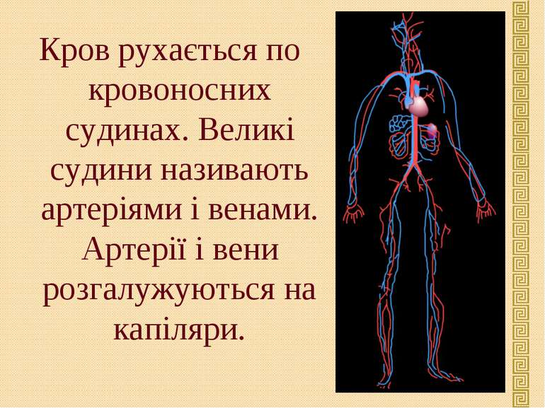 Кров рухається по кровоносних судинах. Великі судини називають артеріями і ве...